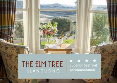 The Elm Tree